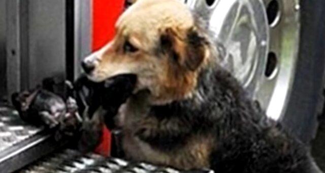Heldenhund. Quelle: Screenshot Youtube