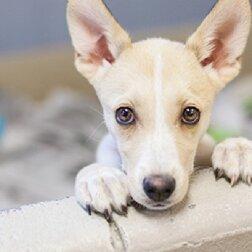 Glück ohne Ende: Ein Hund hat elf Jahre lang im Tierheim gelebt und nun seine Besitzer gefunden