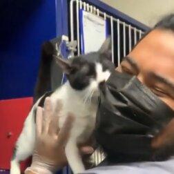 Liebevolles Kätzchen. Quelle: Screenshot Youtube