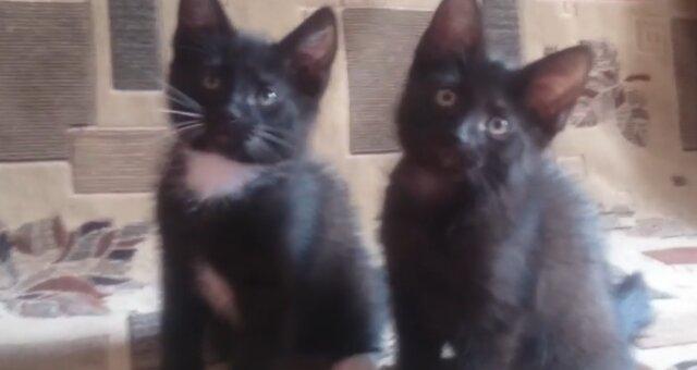 Kätzchen. Quelle: Screenshot Youtube