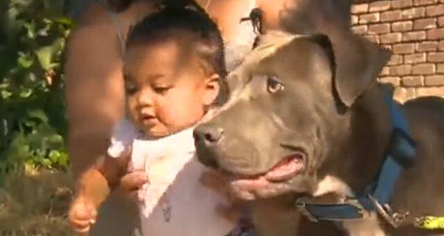 Pittbull Sasha und Mädchen Masaila. Quelle: Screenshot Youtube