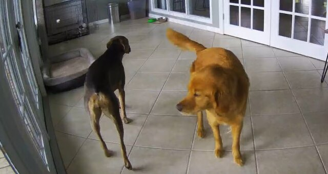 Laker und Roxy. Quelle: Screenshot Youtube