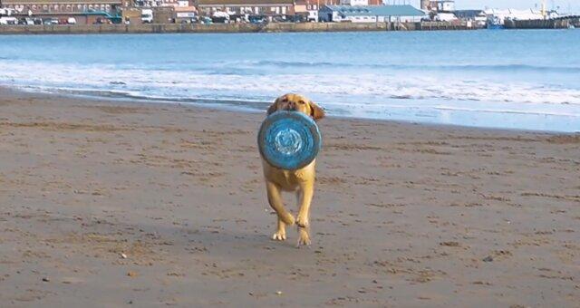 Labrador Molly. Quelle: Screenshot Youtube