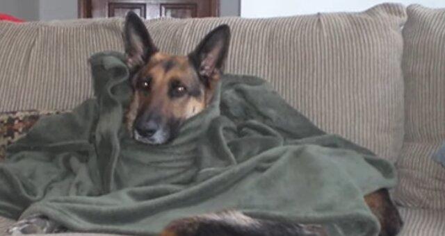 Menschen kamen ins Tierheim, um Tiere zu beruhigen. Quelle: Screenshot Youtube