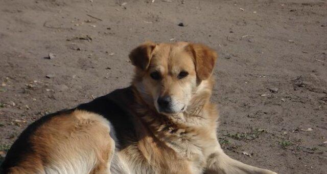 Heldenhafter Hund. Quelle: Screenshot Youtube