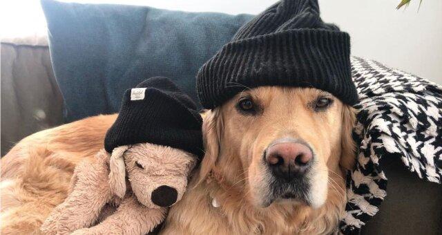 Barley und sein Lieblingsspielzeug Fluffy. Quelle: Instagram