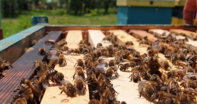 Bienen. Quelle: Screenshot Youtube