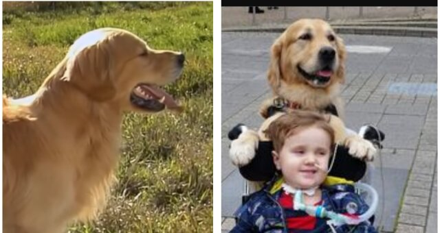 Oscar und Hund Leo. Quelle: Screenshot Youtube