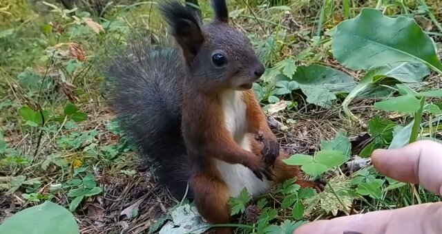 Eichhörnchen. Quelle: Screenshot Youtube