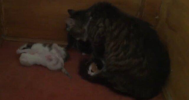 Katzenmutter und ihre Kätzchen. Quelle: Screenshot Youtube
