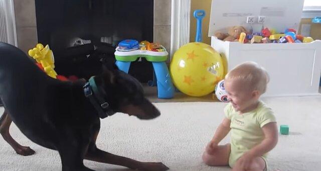 Dobermann und Baby. Quelle: Screenshot Youtube